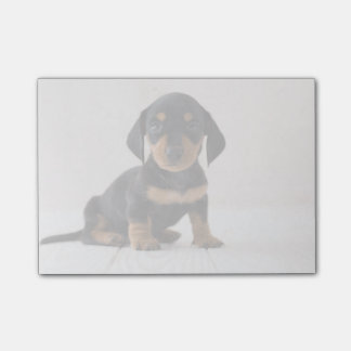 Miniature Dachshund Sitting Post-it® Notes