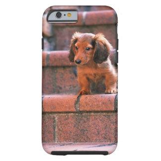 Miniature Dachshund Tough iPhone 6 Case