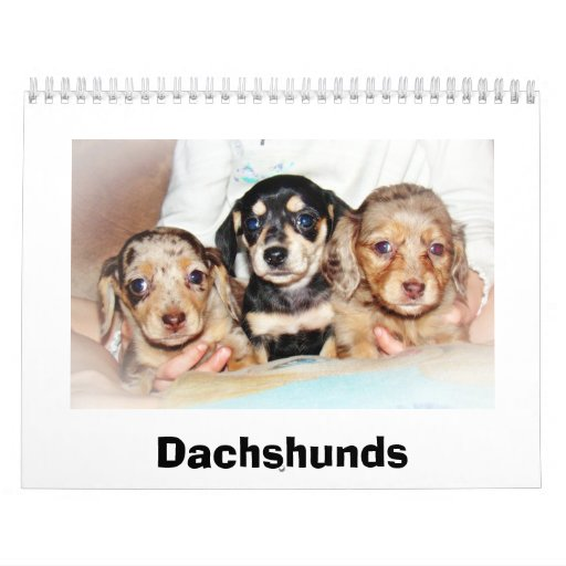 Miniature Dachshuns Wall Calendars