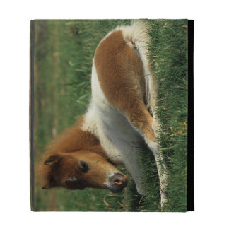 Miniature Foal Laying Down iPad Case