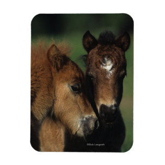 Miniature Foals 2 Magnet