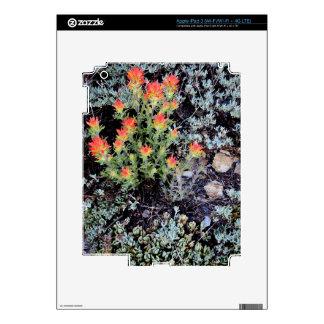 Miniature Garden at Gem Lake iPad 3 Decals