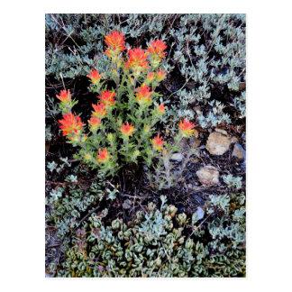 Miniature Garden at Gem Lake Postcard
