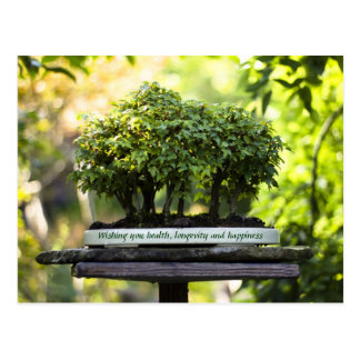 Miniature Green Forest Bonsai Pot Pedestal Leaves Postcard