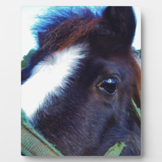 miniature horse face close-up plaque