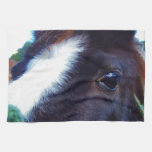 miniature horse face close-up towels