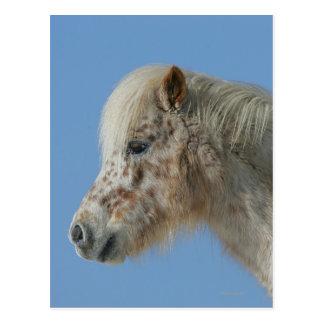 Miniature Horse Headshot Postcard