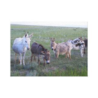 Miniature Horse Herd Canvas Print