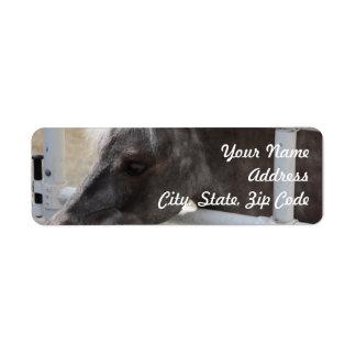 Miniature Horse Label