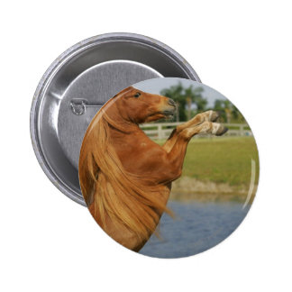 Miniature Horse Rearing 2 Inch Round Button