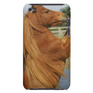 Miniature Horse Rearing Barely There iPod Cover