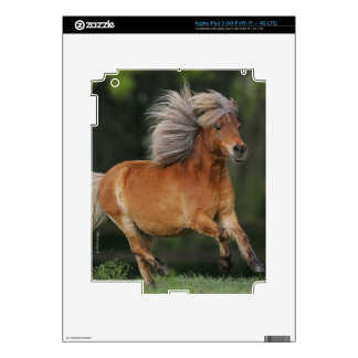 Miniature Horse Running Decals For iPad 3