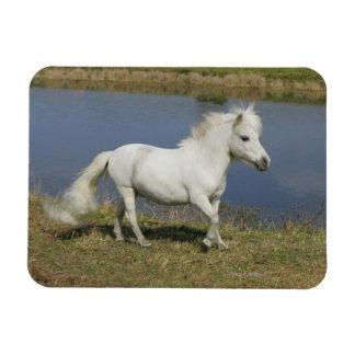 Miniature Horse Running Near Water Flexible Magnets