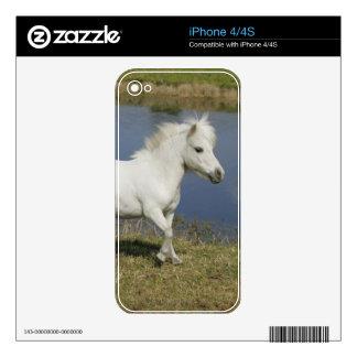 Miniature Horse Running Near Water iPhone 4 Skins