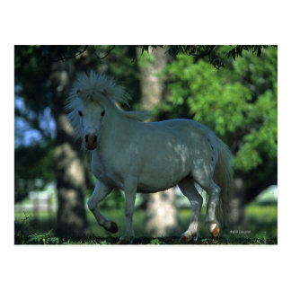 Miniature Horse Standing in the Trees Postcard