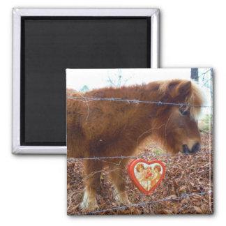 Miniature horse Valentine Red Heart Fridge Magnet