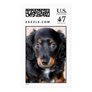 Miniature Long-Haired Dachshund Postage