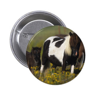 Miniature Mare & Foal in the Flowers Pinback Button