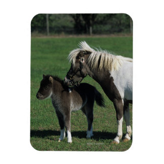 Miniature Mare & Foal Standing Magnet
