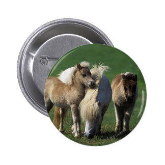 Miniature Mare & Foals 1 Button