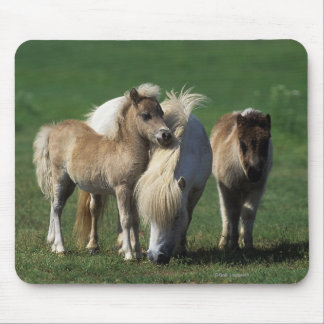 Miniature Mare & Foals 1 Mouse Pad
