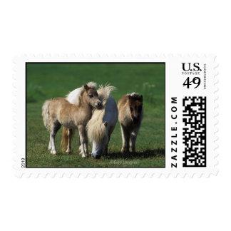 Miniature Mare & Foals 1 Postage