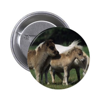 Miniature Mare & Foals 3 Pinback Button