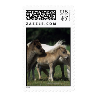 Miniature Mare & Foals 3 Postage Stamp