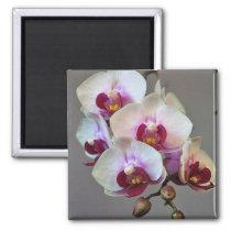 Miniature Orchid Magnet