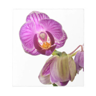 Miniature Orchid Notepad
