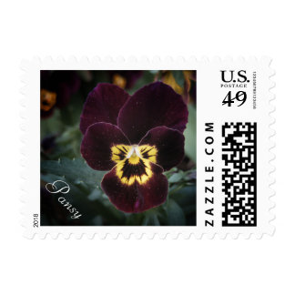 Miniature Pansy Close-Up Photography Postage