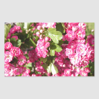 Miniature Pink Roses Rectangular Sticker