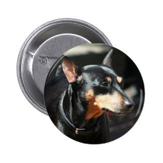 Miniature Pinscher button