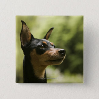 Miniature Pinscher (Min-Pin) 2 Button