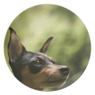 Miniature Pinscher (Min-Pin) 2 Dinner Plate