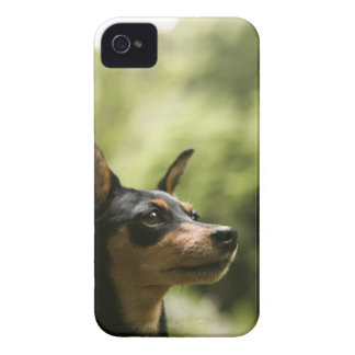 Miniature Pinscher (Min-Pin) 2 iPhone 4 Case-Mate Case