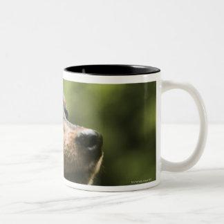 Miniature Pinscher (Min-Pin) 2 Two-Tone Coffee Mug