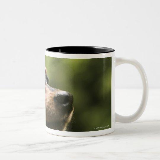 Miniature Pinscher (Min-Pin) Two-Tone Coffee Mug