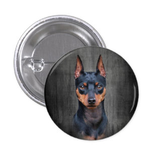 Miniature Pinscher Pinback Button