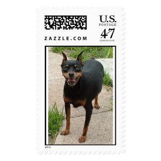 miniature pinscher postage