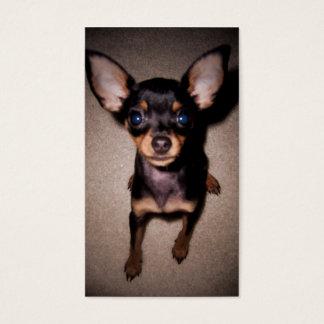 miniature pinscher pup business card