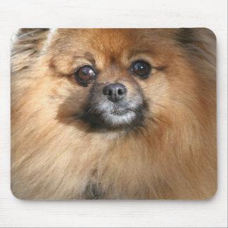 Miniature Pomeranian Mouse Pad