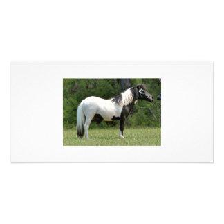 miniature pony's card