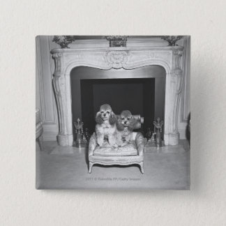 Miniature poodles sitting in front of fireplace button
