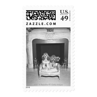 Miniature poodles sitting in front of fireplace postage