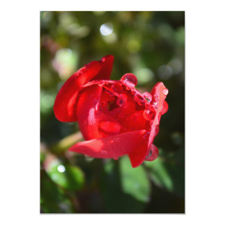 Miniature Red Rose Invitations