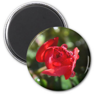 Miniature Red Rose Magnet