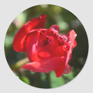 Miniature Red Rose Stickers