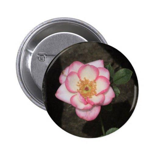 Miniature Rose Buttons