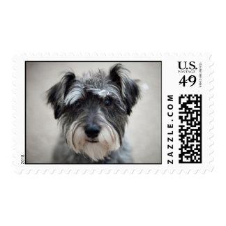 Miniature Schnauzer Dog Postage Stamp